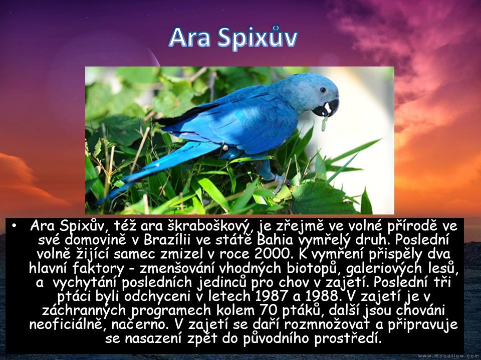 • Ara Spixův, též ara škraboškový, je zřejmě ve volné přírodě ve své domovině v Brazílii ve státě Bahia vymřelý druh. Poslední volně žijící samec zmiz