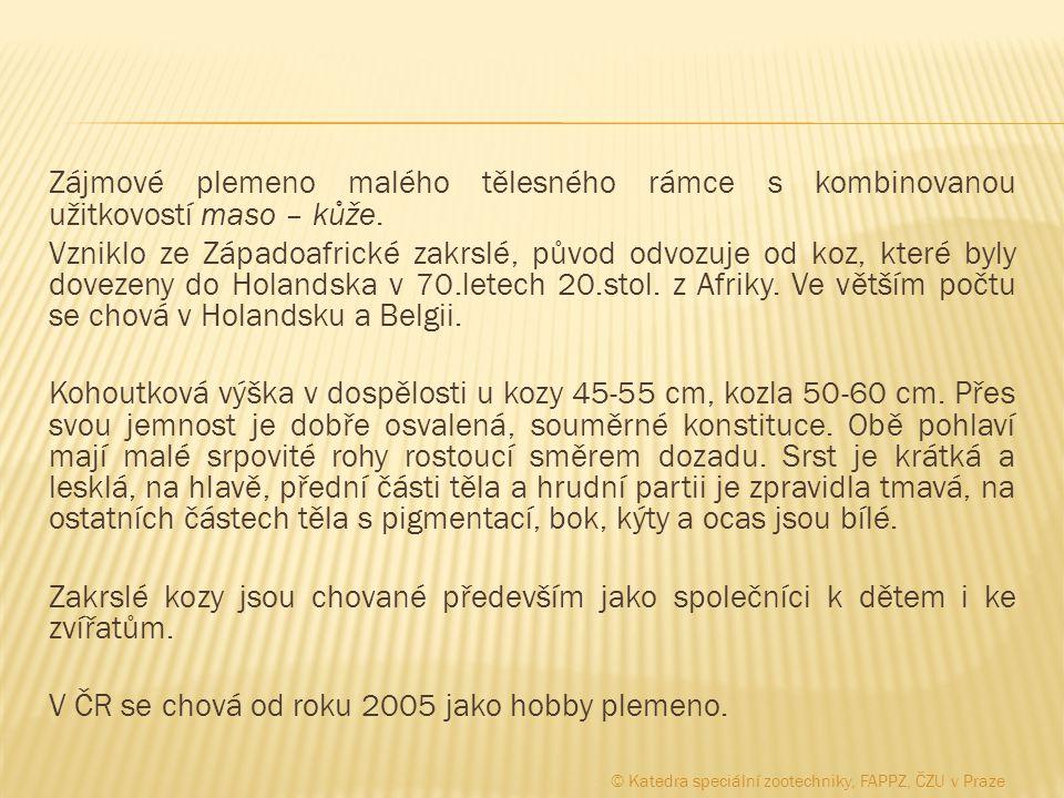 mladý kozlík výstavní kolekce © Katedra speciální zootechniky, FAPPZ, ČZU v Praze