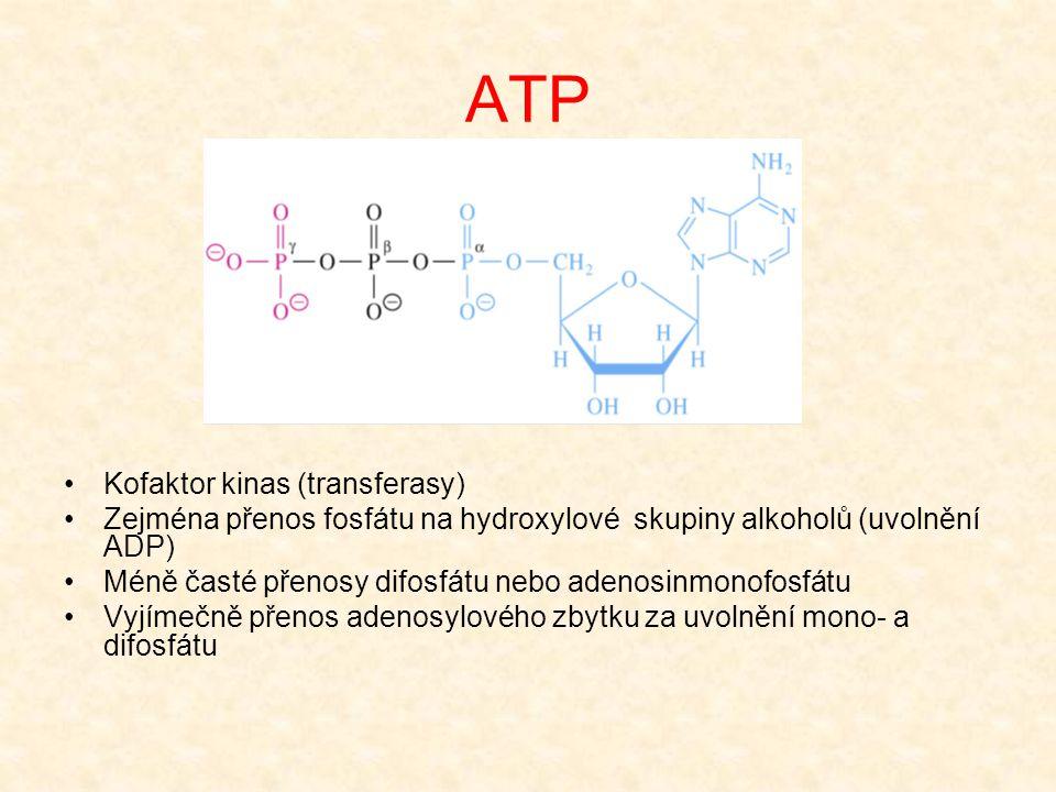 ATP •Kofaktor kinas (transferasy) •Zejména přenos fosfátu na hydroxylové skupiny alkoholů (uvolnění ADP) •Méně časté přenosy difosfátu nebo adenosinmo
