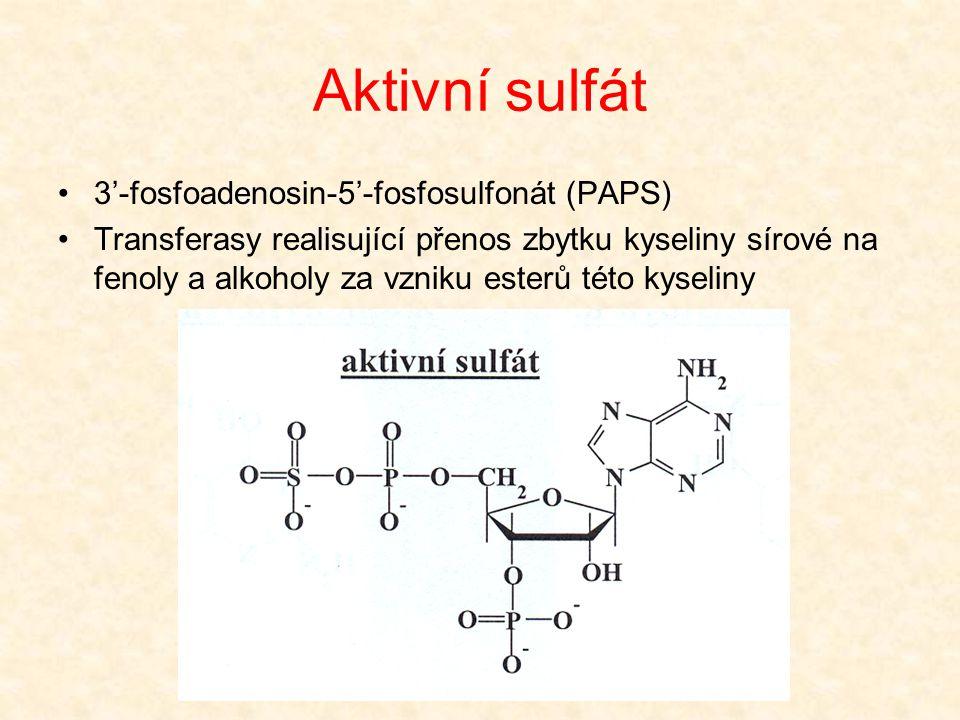 Aktivní sulfát •3'-fosfoadenosin-5'-fosfosulfonát (PAPS) •Transferasy realisující přenos zbytku kyseliny sírové na fenoly a alkoholy za vzniku esterů