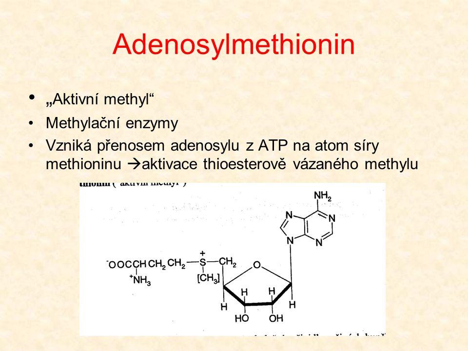 """Adenosylmethionin •"""" Aktivní methyl"""" •Methylační enzymy •Vzniká přenosem adenosylu z ATP na atom síry methioninu  aktivace thioesterově vázaného meth"""