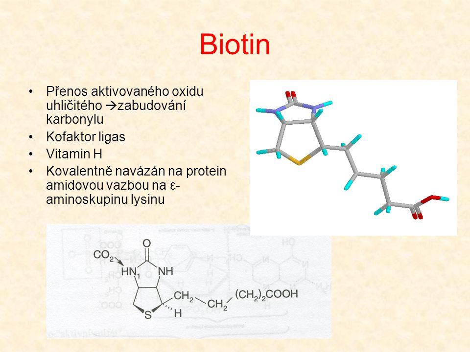 Biotin •Přenos aktivovaného oxidu uhličitého  zabudování karbonylu •Kofaktor ligas •Vitamin H •Kovalentně navázán na protein amidovou vazbou na ε- am