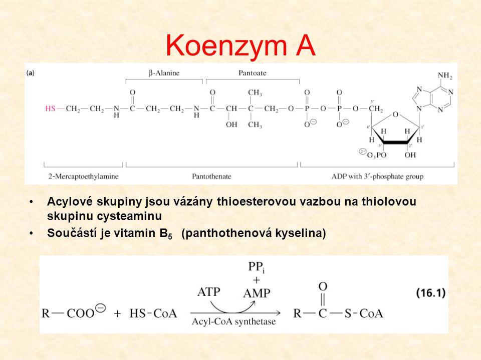 Koenzym A •Acylové skupiny jsou vázány thioesterovou vazbou na thiolovou skupinu cysteaminu •Součástí je vitamin B 5 (panthothenová kyselina)