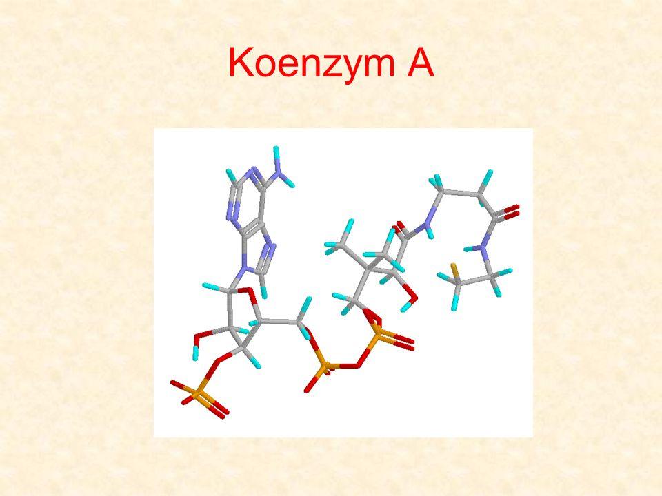 Koenzym A