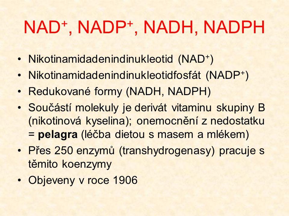 NAD +, NADP +, NADH, NADPH •Nikotinamidadenindinukleotid (NAD + ) •Nikotinamidadenindinukleotidfosfát (NADP + ) •Redukované formy (NADH, NADPH) •Součá