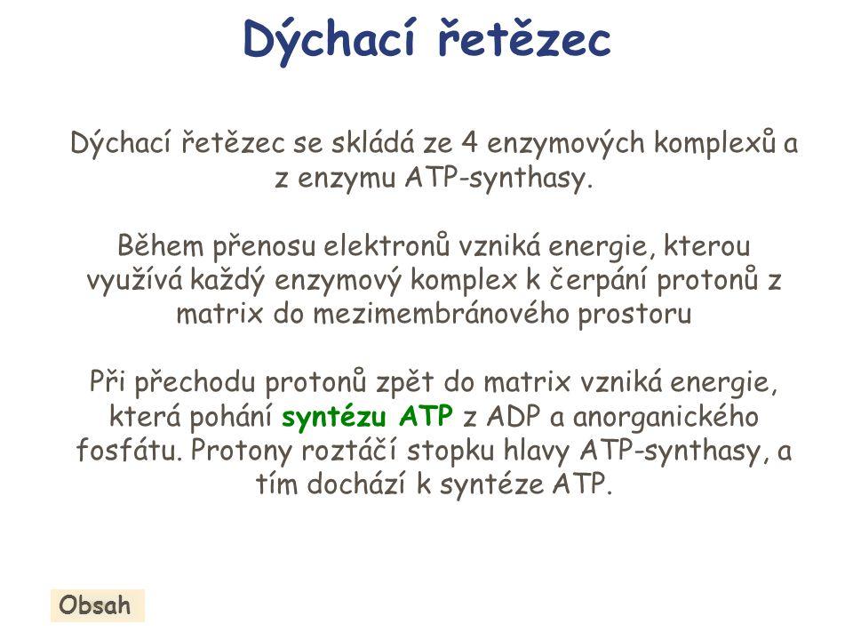 Dýchací řetězec Dýchací řetězec se skládá ze 4 enzymových komplexů a z enzymu ATP-synthasy. Během přenosu elektronů vzniká energie, kterou využívá kaž