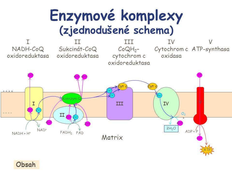 Enzymové komplexy (zjednodušené schema) I NADH-CoQ oxidoreduktasa II Sukcinát-CoQ oxidoreduktasa III CoQH 2 – cytochrom c oxidoreduktasa IV Cytochrom
