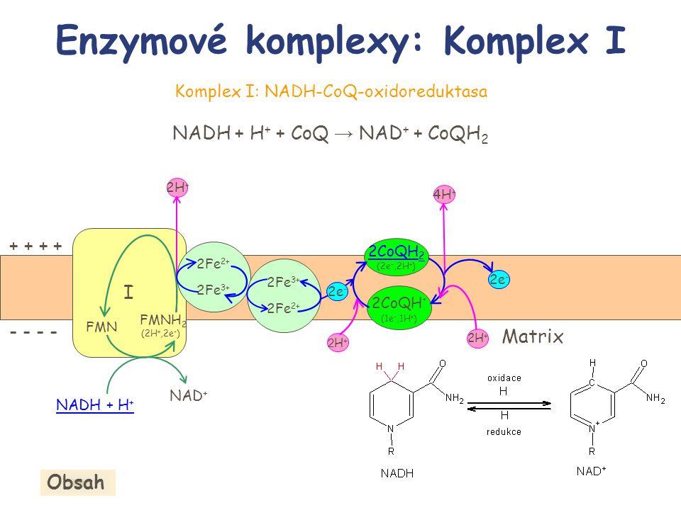Enzymové komplexy: Komplex I Komplex I: NADH-CoQ-oxidoreduktasa NADH + H + + CoQ → NAD + + CoQH 2 I NADH + H + NAD + + + - - 2H + 2Fe 2+ 2Fe 3+ FMN FM