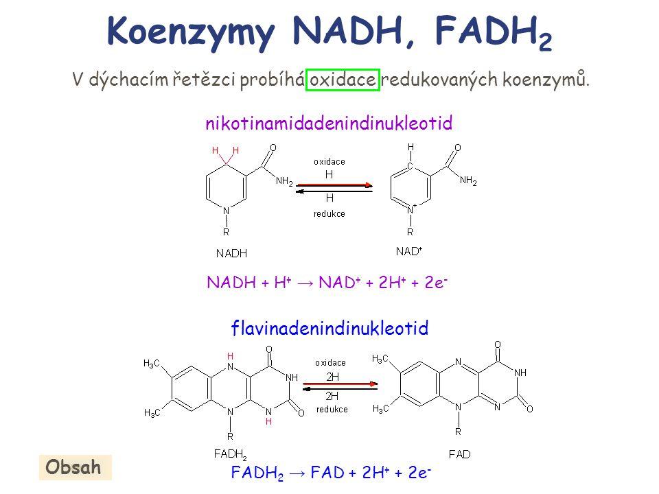 nikotinamidadenindinukleotid flavinadenindinukleotid V dýchacím řetězci probíhá oxidace redukovaných koenzymů. Koenzymy NADH, FADH 2 NADH + H + → NAD