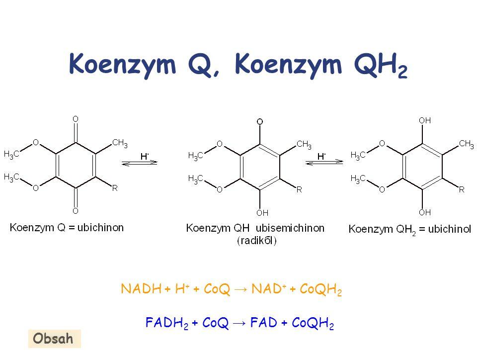 Koenzym Q, Koenzym QH 2 NADH + H + + CoQ → NAD + + CoQH 2 FADH 2 + CoQ → FAD + CoQH 2 Obsah