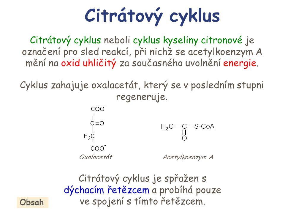 Citrátový cyklus neboli cyklus kyseliny citronové je označení pro sled reakcí, při nichž se acetylkoenzym A mění na oxid uhličitý za současného uvolně