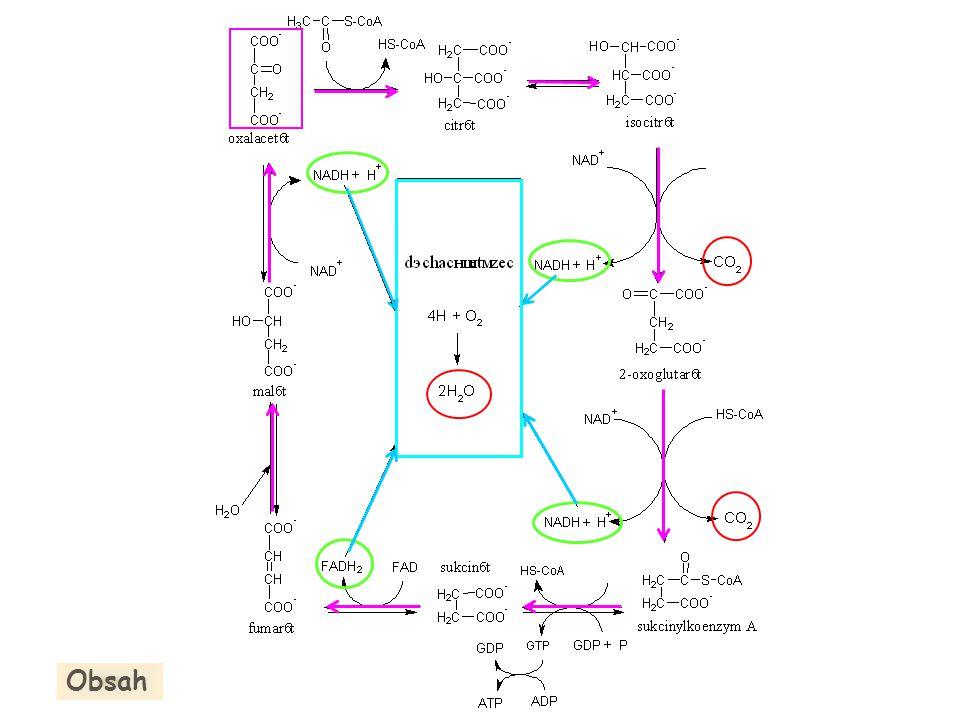Enzymové komplexy: Komplex II II Sukcinát - OOC-CH 2 -CH 2 -COO - Fumarát - OOC-CH=CH-COO - + + - - Matrix 2e - FAD FADH 2 (2H +,2e - ) 2CoQH.