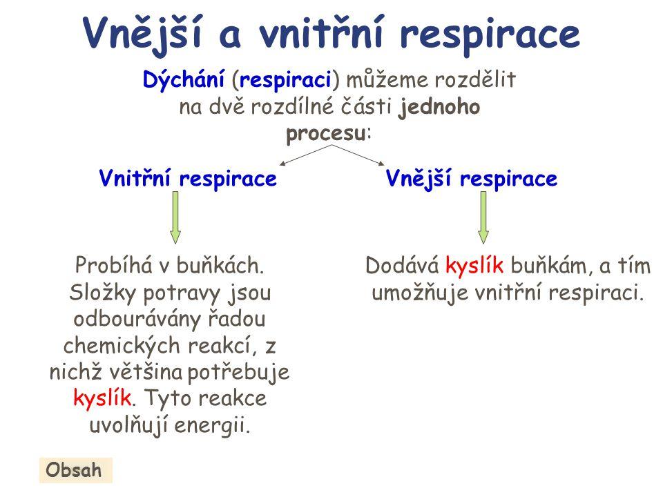 Obr.2. Mitochondrie Dýchací řetězec je lokalizován ve vnitřní mitochondriální membráně.