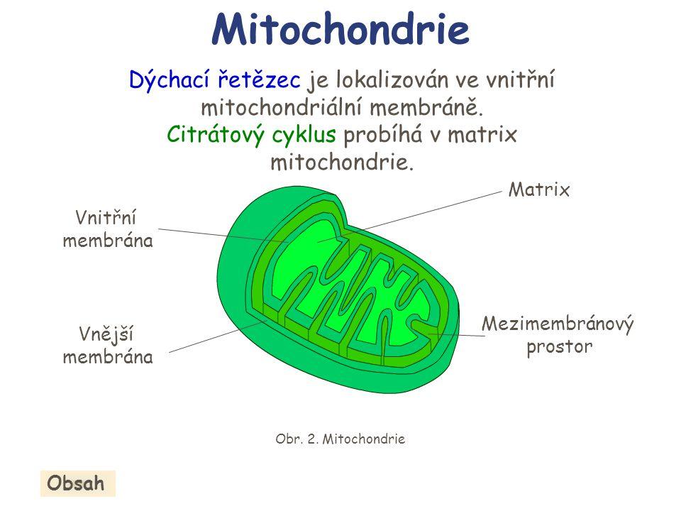 Obr. 2. Mitochondrie Dýchací řetězec je lokalizován ve vnitřní mitochondriální membráně. Citrátový cyklus probíhá v matrix mitochondrie. Vnější membrá