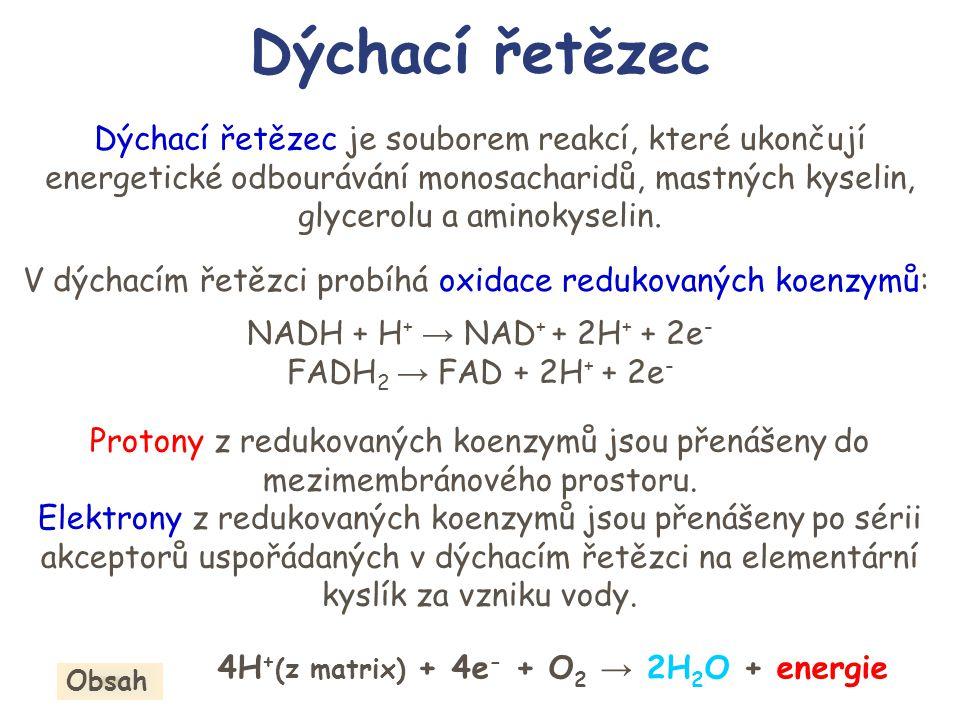 Enzymové komplexy I NADH-CoQ oxidoreduktasa II Sukcinát-CoQ oxidoreduktasa III CoQH 2 – cytochrom c oxidoreduktasa IV Cytochrom c oxidasa V ATP-synthasa Matrix IIIIV + + - - 2H 2 O 4H + 4e - 4H + 2e - V H+H+ ADP + P ATP H+H+ 2e - II e-e- FADH 2 FAD e-e- 2H + CoQH 2 CoQH.