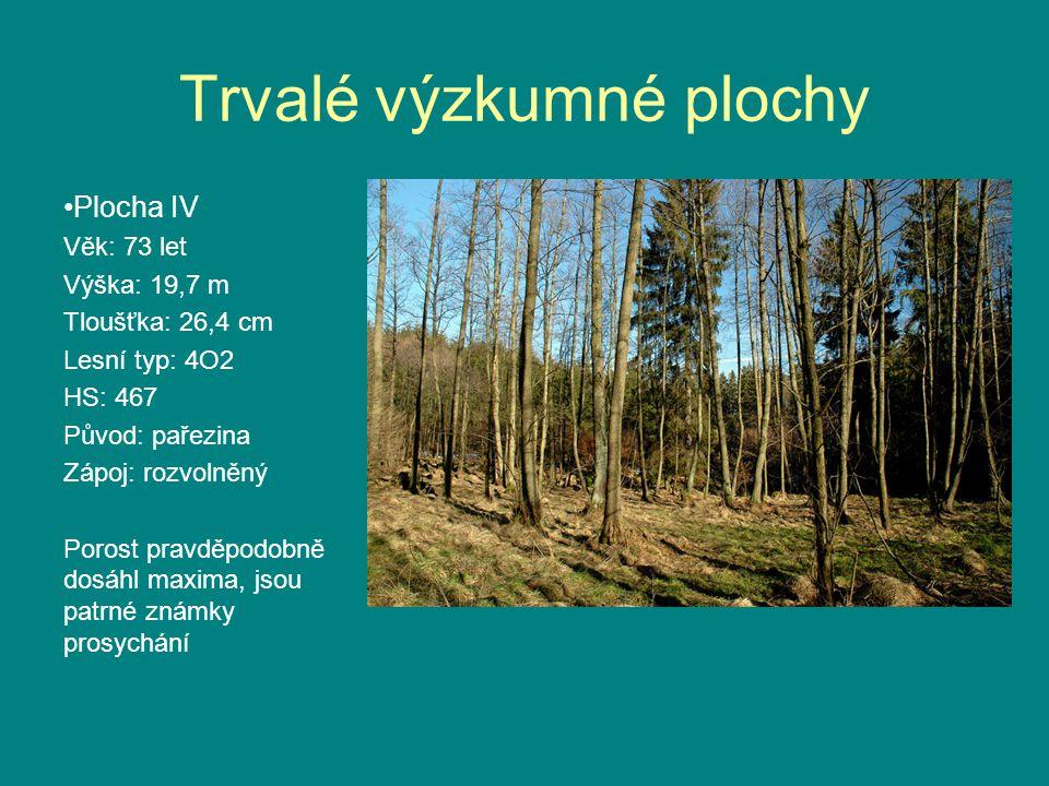 Trvalé výzkumné plochy •Plocha IV Věk: 73 let Výška: 19,7 m Tloušťka: 26,4 cm Lesní typ: 4O2 HS: 467 Původ: pařezina Zápoj: rozvolněný Porost pravděpodobně dosáhl maxima, jsou patrné známky prosychání