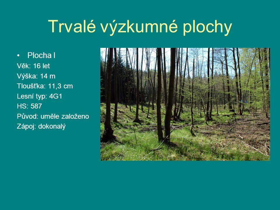 •Plocha I Věk: 16 let Výška: 14 m Tloušťka: 11,3 cm Lesní typ: 4G1 HS: 587 Původ: uměle založeno Zápoj: dokonalý
