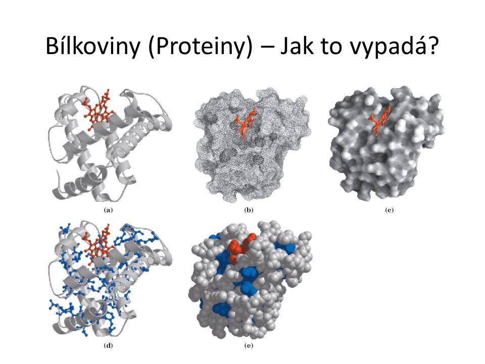 Bílkoviny (Proteiny) – Jak to vypadá?