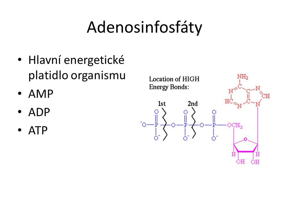 Adenosinfosfáty • Hlavní energetické platidlo organismu • AMP • ADP • ATP
