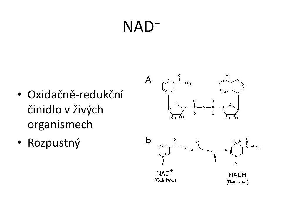 NAD + • Oxidačně-redukční činidlo v živých organismech • Rozpustný