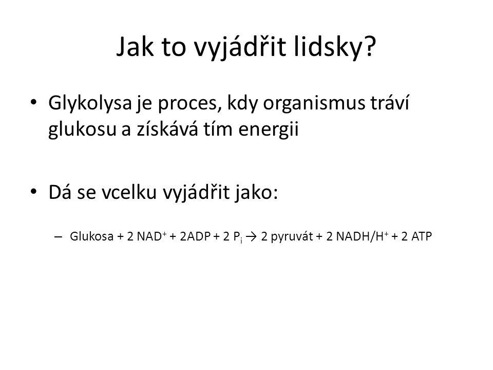 Jak to vyjádřit lidsky? • Glykolysa je proces, kdy organismus tráví glukosu a získává tím energii • Dá se vcelku vyjádřit jako: – Glukosa + 2 NAD + +