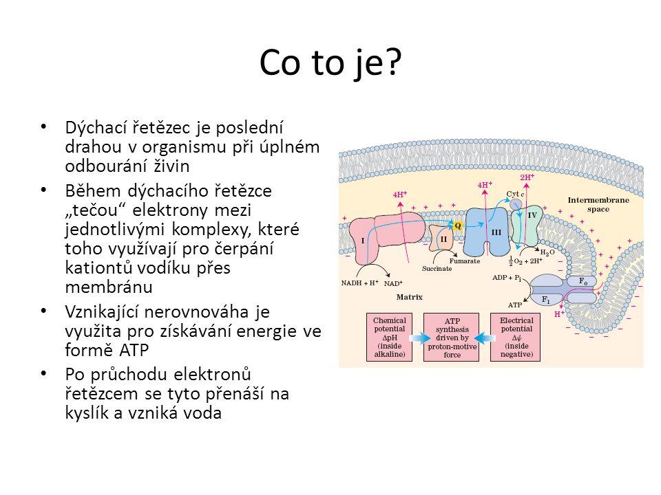 """Co to je? • Dýchací řetězec je poslední drahou v organismu při úplném odbourání živin • Během dýchacího řetězce """"tečou"""" elektrony mezi jednotlivými ko"""