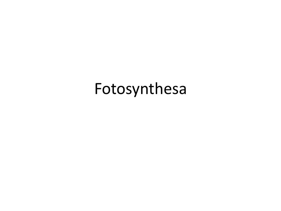 Fotosynthesa