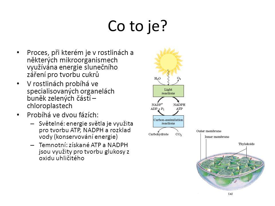 Co to je? • Proces, při kterém je v rostlinách a některých mikroorganismech využívána energie slunečního záření pro tvorbu cukrů • V rostlinách probíh