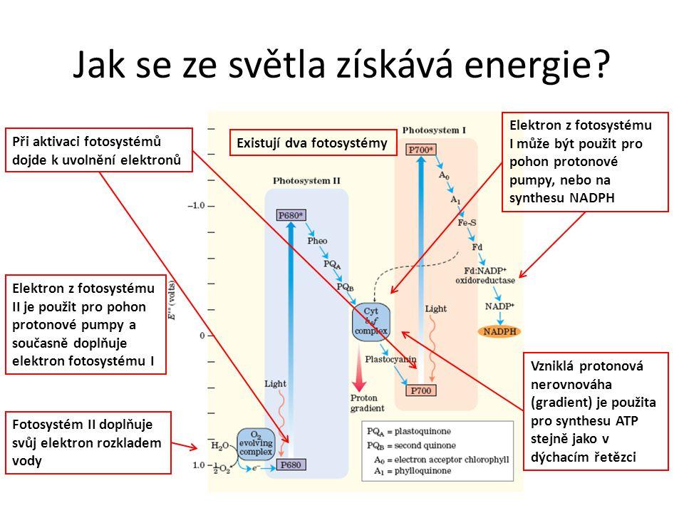 Jak se ze světla získává energie? Při aktivaci fotosystémů dojde k uvolnění elektronů Elektron z fotosystému I může být použit pro pohon protonové pum