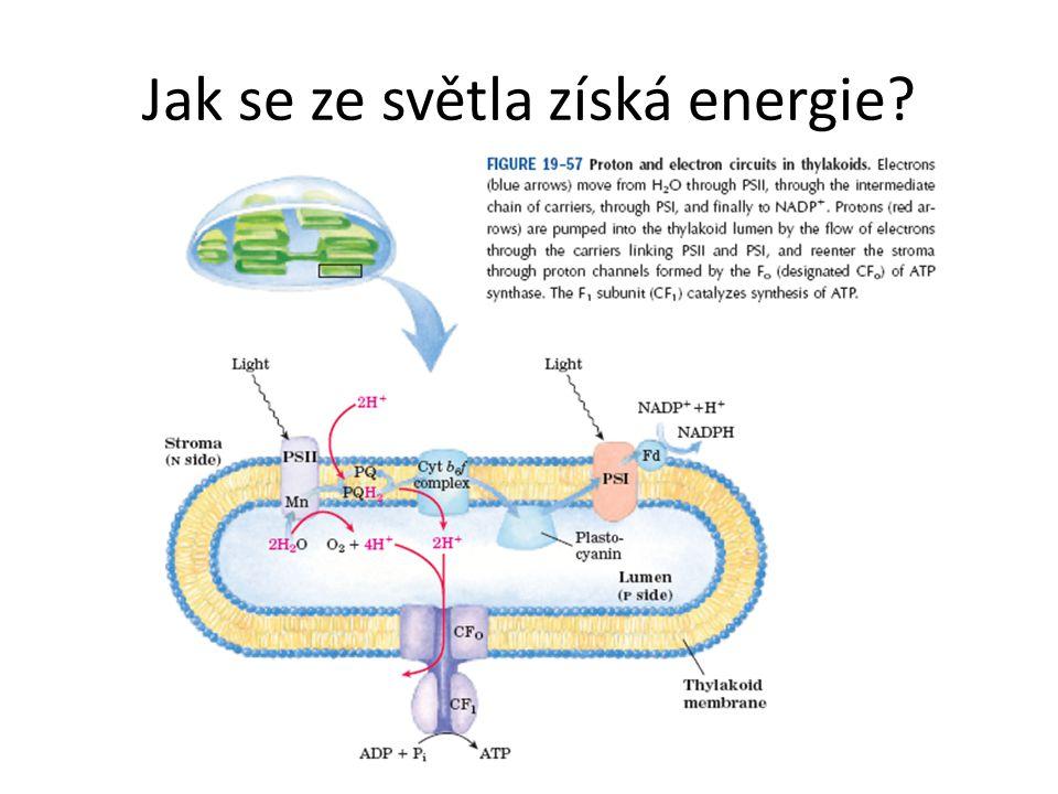 Jak se ze světla získá energie?