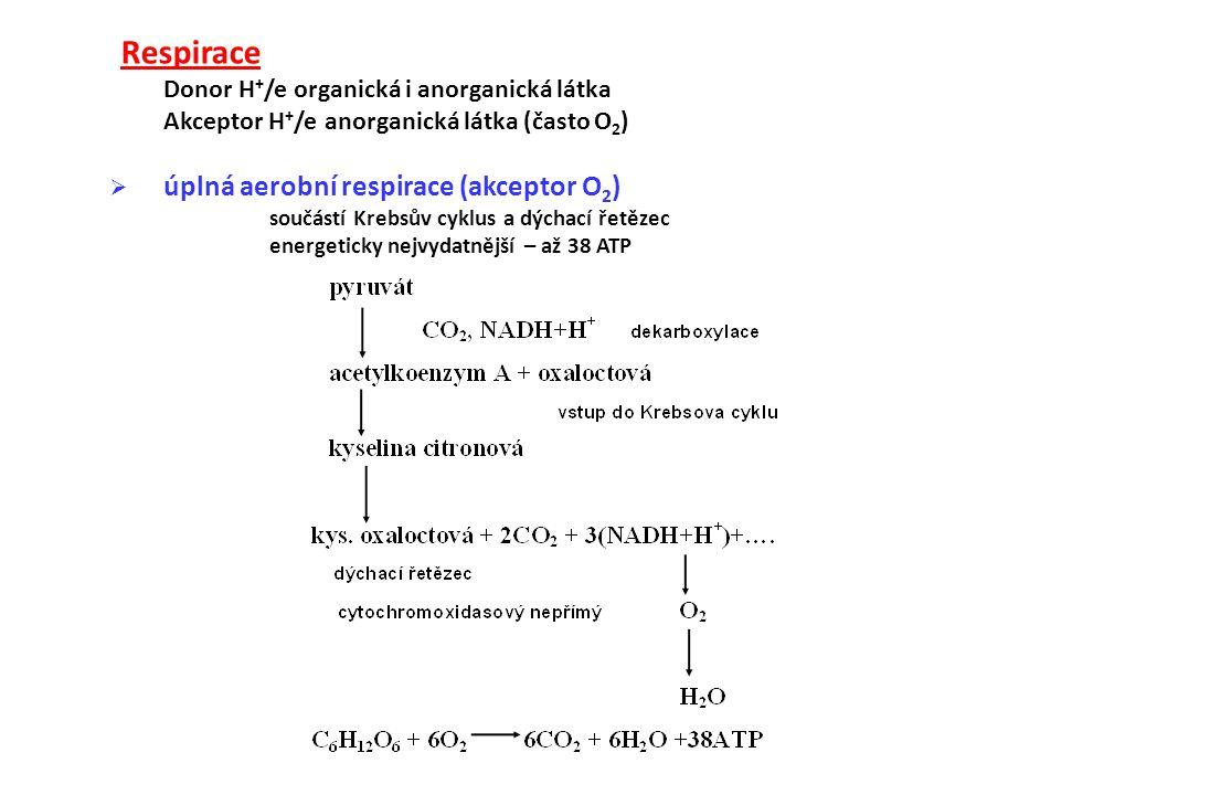 Respirace Donor H + /e organická i anorganická látka Akceptor H + /e anorganická látka (často O 2 )  úplná aerobní respirace (akceptor O 2 ) součástí