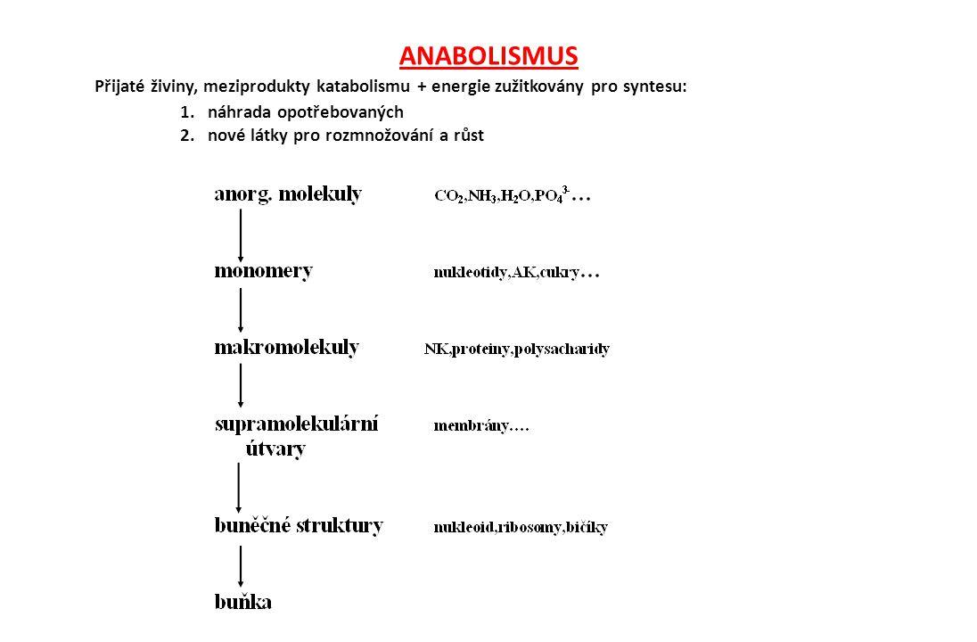 ANABOLISMUS Přijaté živiny, meziprodukty katabolismu + energie zužitkovány pro syntesu: 1. náhrada opotřebovaných 2. nové látky pro rozmnožování a růs