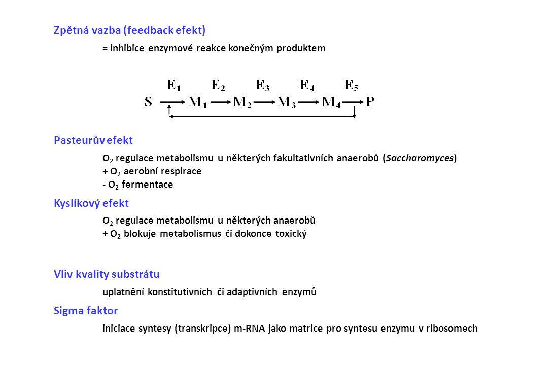 Zpětná vazba (feedback efekt) = inhibice enzymové reakce konečným produktem Pasteurův efekt O 2 regulace metabolismu u některých fakultativních anaero