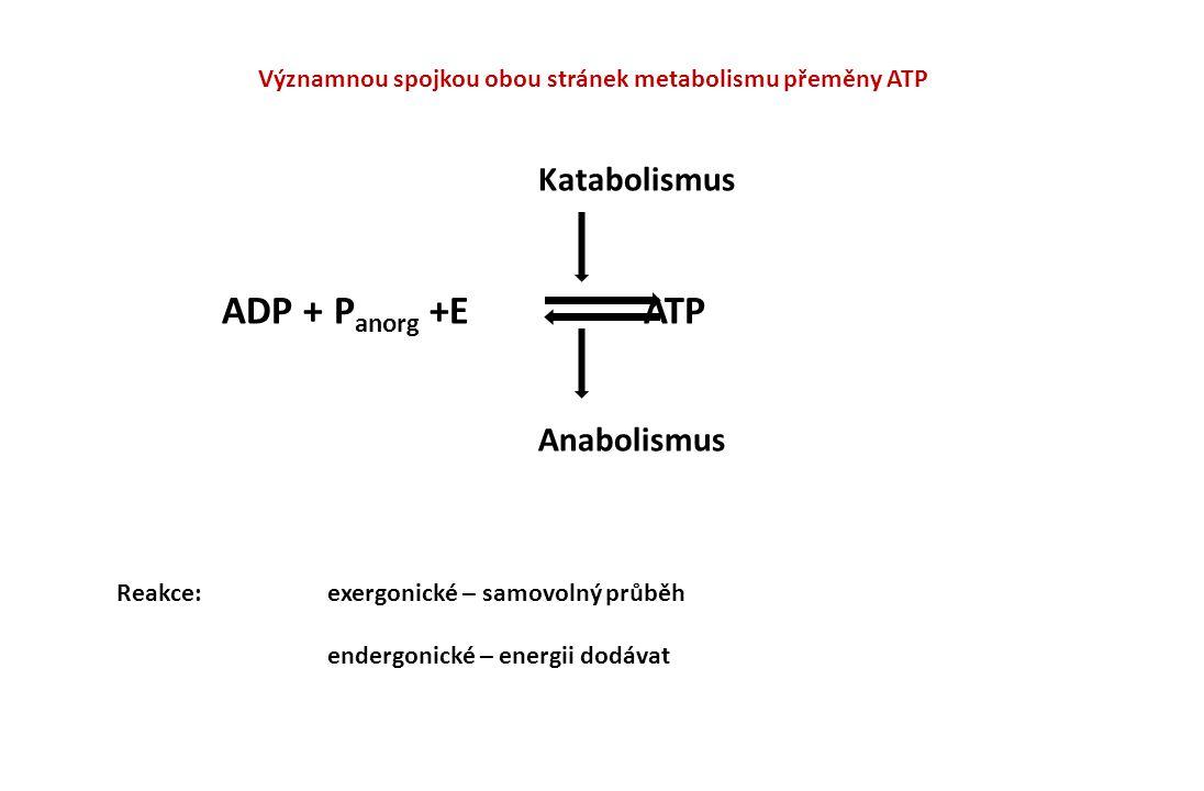 ATP, NADP, NAD  ATP = adenosintrifosfát – universální přenašeč E - uložena v energeticky bohatých vazbách Adenosin ribosa P P P 1) 2) 2) 1) esterová vazba 2) anhydridová vazba (energet.