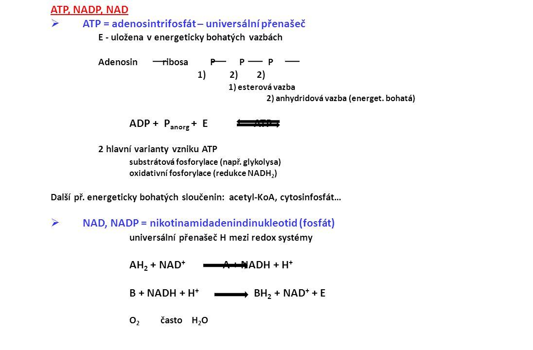 ATP, NADP, NAD  ATP = adenosintrifosfát – universální přenašeč E - uložena v energeticky bohatých vazbách Adenosin ribosa P P P 1) 2) 2) 1) esterová