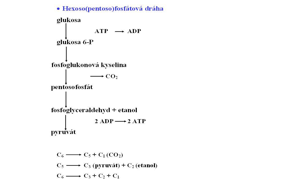 Fermentace Donor i akceptor H + /e: organická látka Typická pro anaerobní podmínky Název podle koncových produktů - etanolová - etanol + CO 2 - mléčná – kyselina mléčná (+ případně další kyseliny+alkohol+CO 2 ) - máselná – kyselina máselná + další kys.