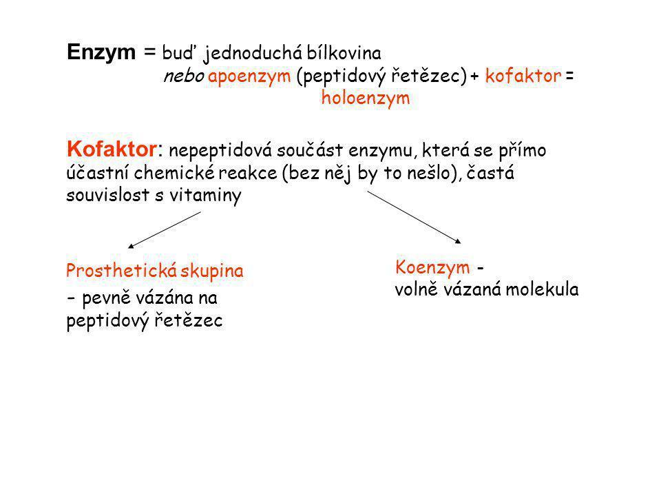 Enzym = buď jednoduchá bílkovina nebo apoenzym (peptidový řetězec) + kofaktor = holoenzym Kofaktor: nepeptidová součást enzymu, která se přímo účastní