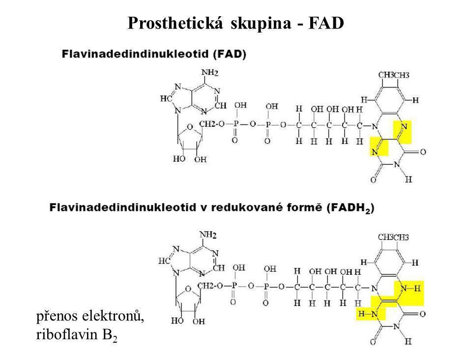 Prosthetická skupina - FAD přenos elektronů, riboflavin B 2
