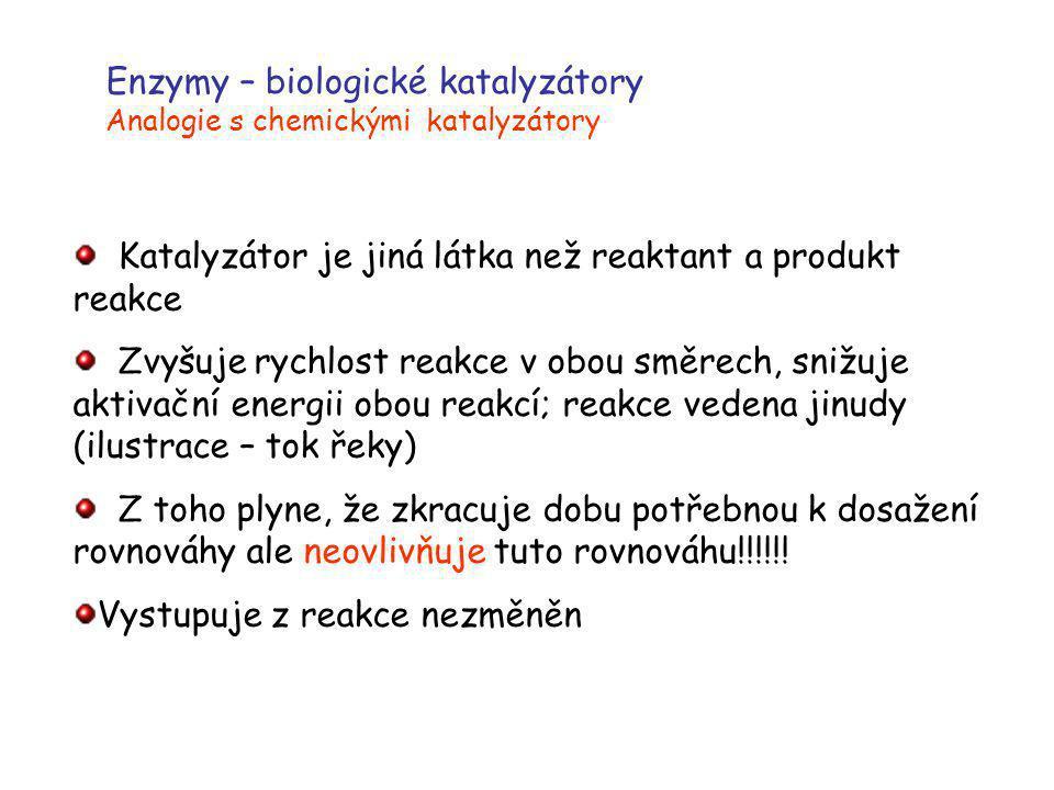 Enzymy – biologické katalyzátory Analogie s chemickými katalyzátory Katalyzátor je jiná látka než reaktant a produkt reakce Zvyšuje rychlost reakce v
