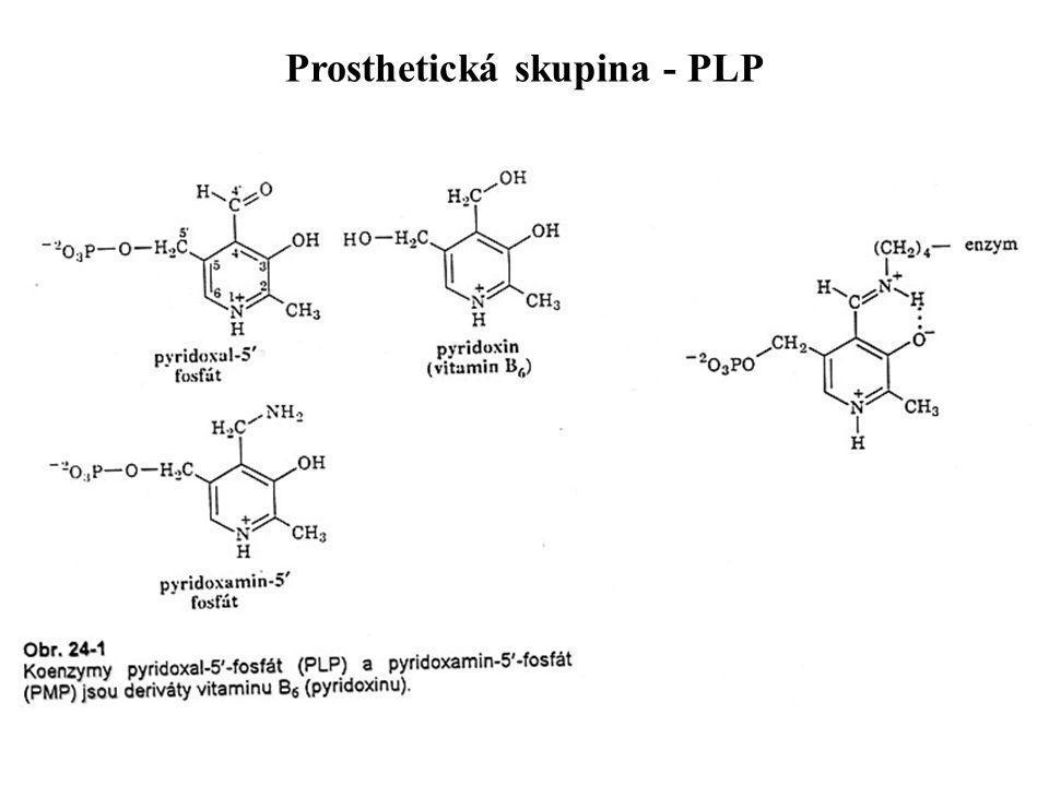 Prosthetická skupina - PLP
