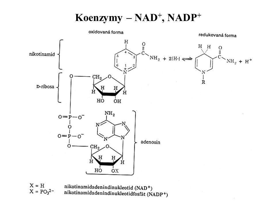 Koenzymy – NAD +, NADP +