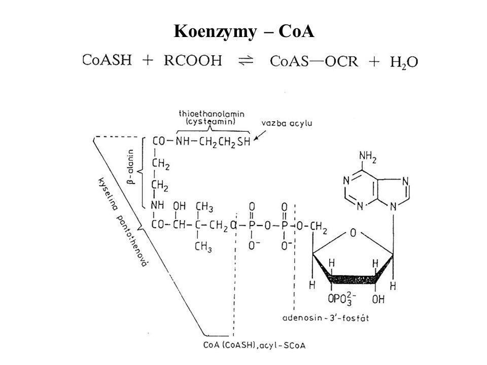 Koenzymy – CoA