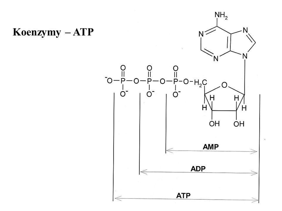 Koenzymy – ATP
