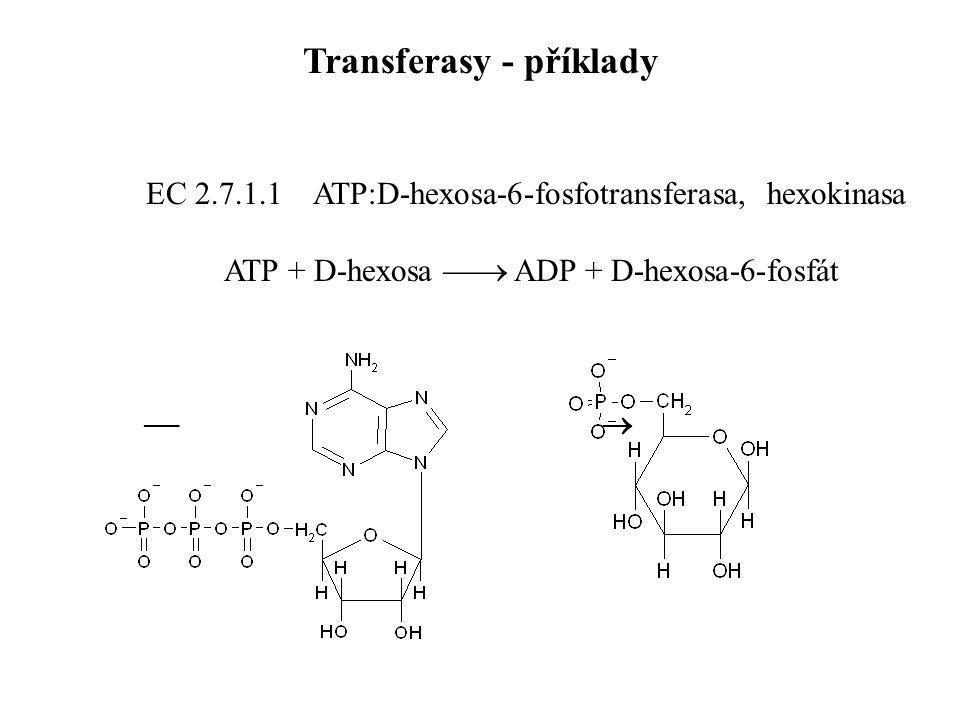 EC 2.7.1.1 ATP:D-hexosa-6-fosfotransferasa, hexokinasa ATP + D-hexosa  ADP + D-hexosa-6-fosfát   Transferasy - příklady