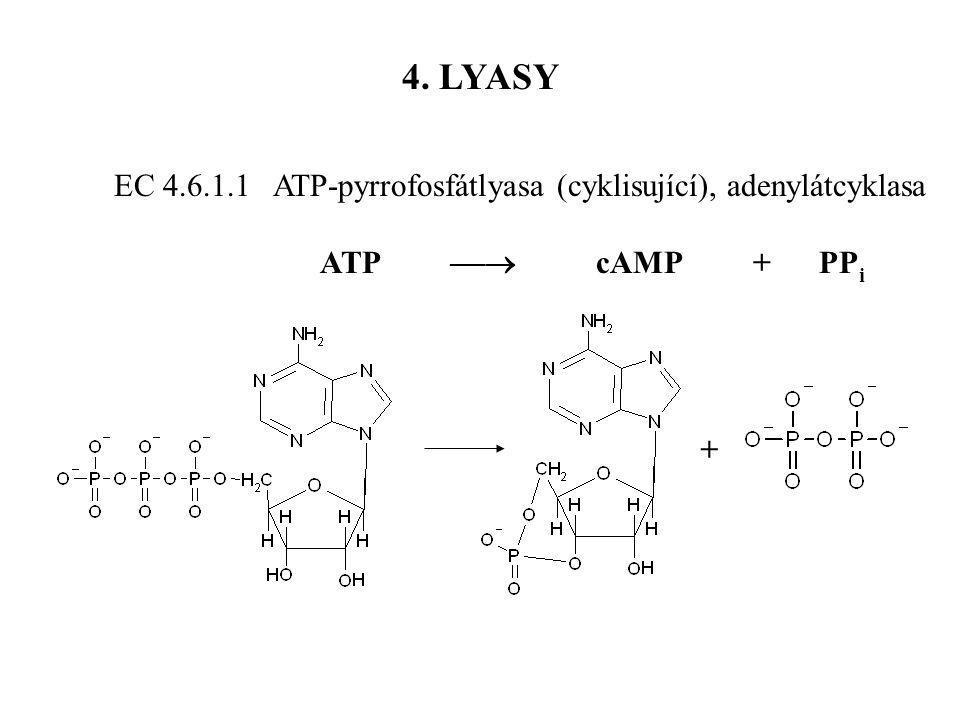 EC 4.6.1.1 ATP-pyrrofosfátlyasa (cyklisující), adenylátcyklasa ATP  cAMP + PP i 4. LYASY +