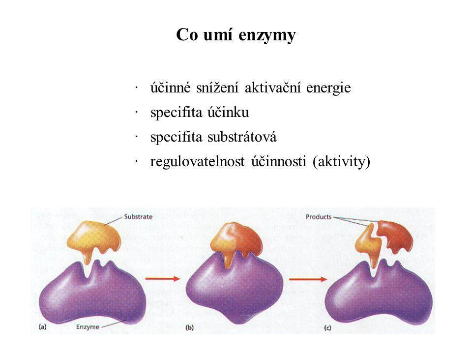 · účinné snížení aktivační energie · specifita účinku · specifita substrátová · regulovatelnost účinnosti (aktivity) Co umí enzymy