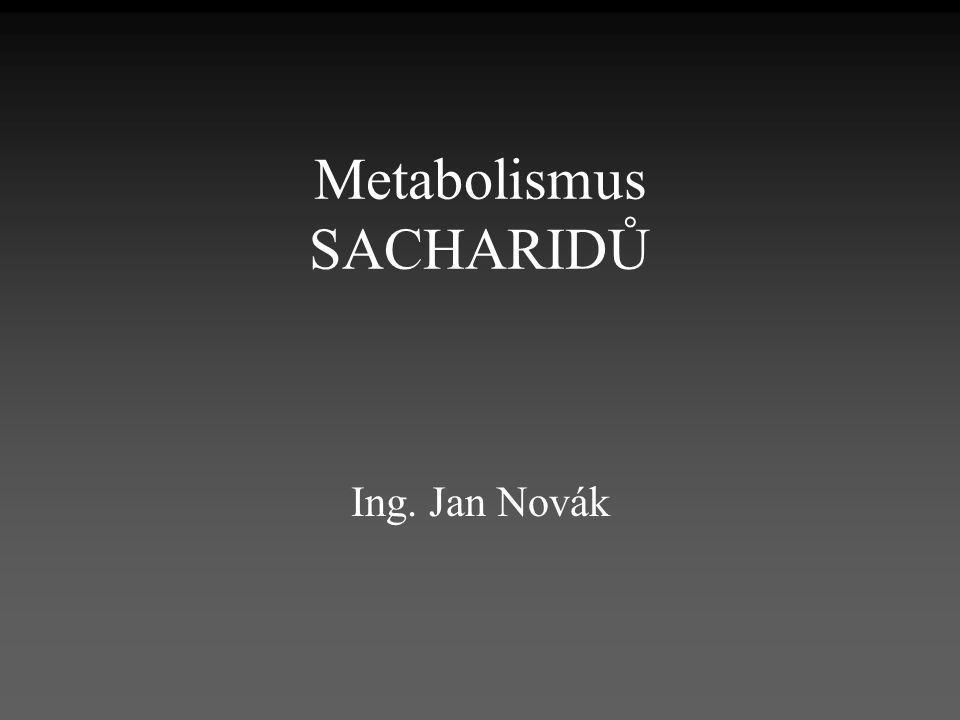 Metabolismus SACHARIDŮ Ing. Jan Novák