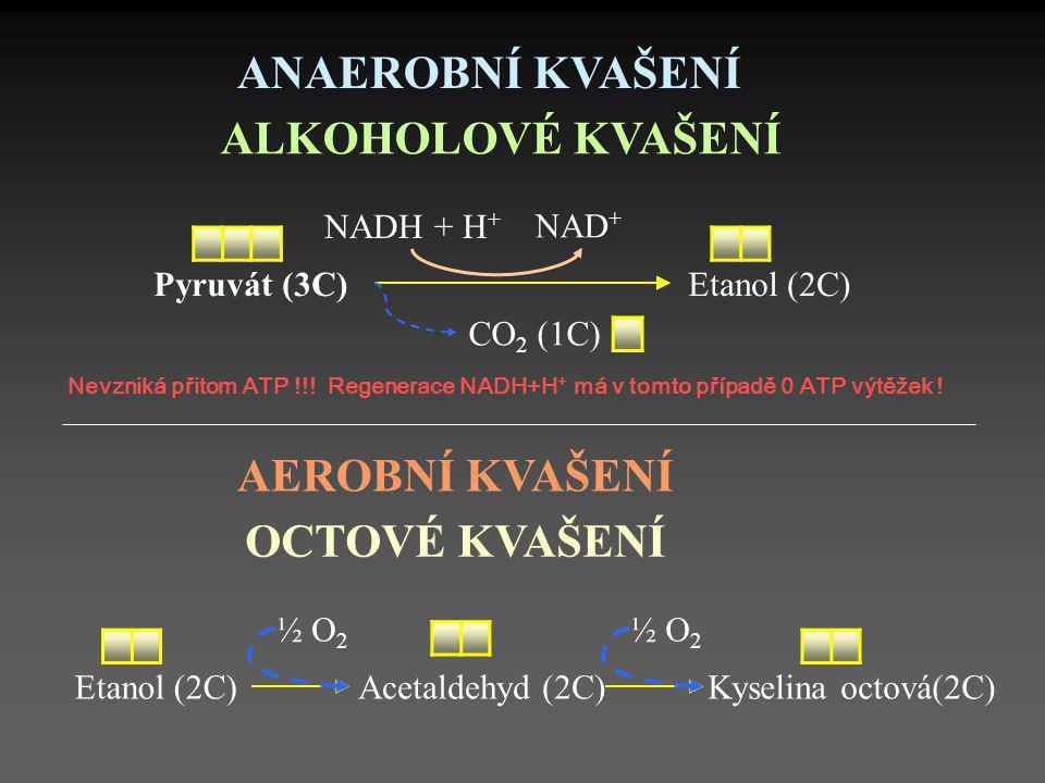 Nevzniká přitom ATP !!! Regenerace NADH+H + má v tomto případě 0 ATP výtěžek ! Pyruvát (3C)Etanol (2C) NAD + NADH + H + ANAEROBNÍ KVAŠENÍ ALKOHOLOVÉ K