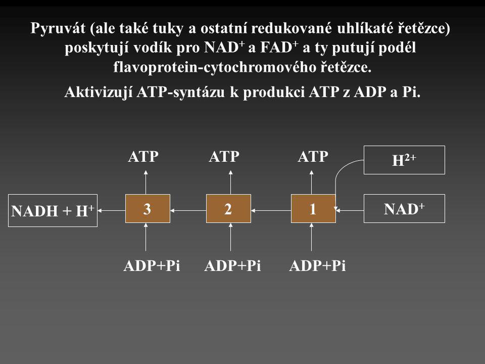 NADH + H + 321 ADP+Pi ATP NAD + Pyruvát (ale také tuky a ostatní redukované uhlíkaté řetězce) poskytují vodík pro NAD + a FAD + a ty putují podél flav