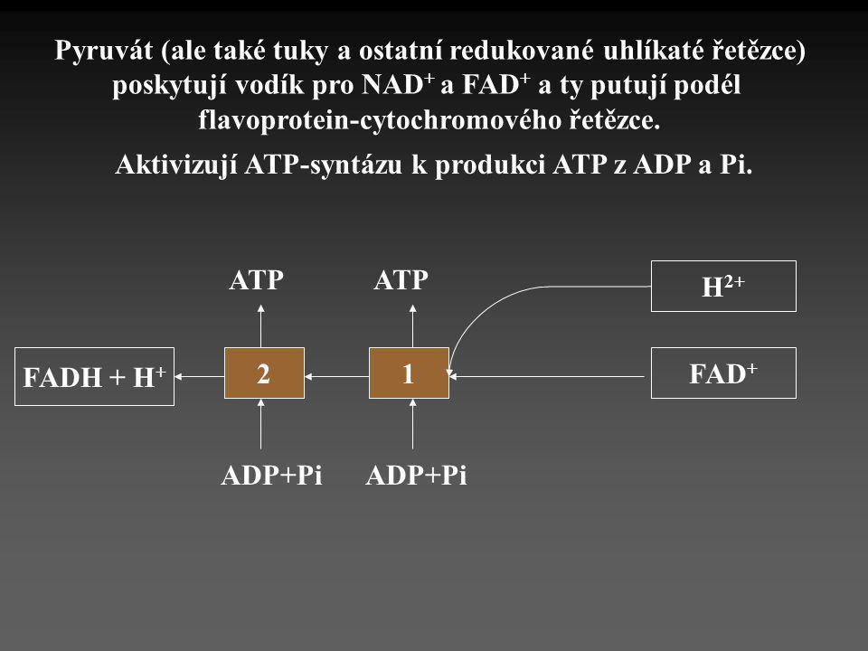 FADH + H + 21 ADP+Pi ATP FAD + Pyruvát (ale také tuky a ostatní redukované uhlíkaté řetězce) poskytují vodík pro NAD + a FAD + a ty putují podél flavo